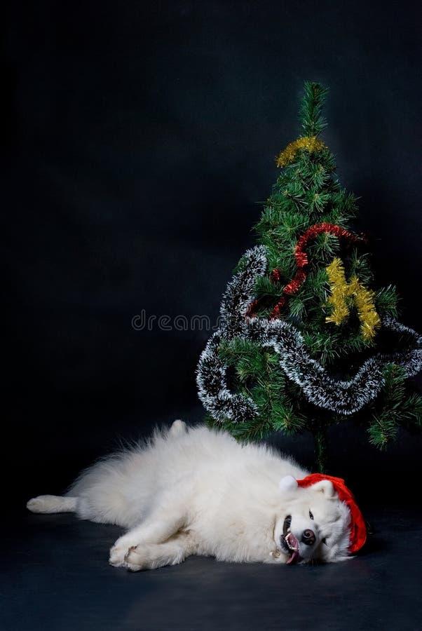 Crabot de Santa photographie stock