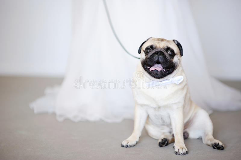 Crabot drôle au mariage image stock