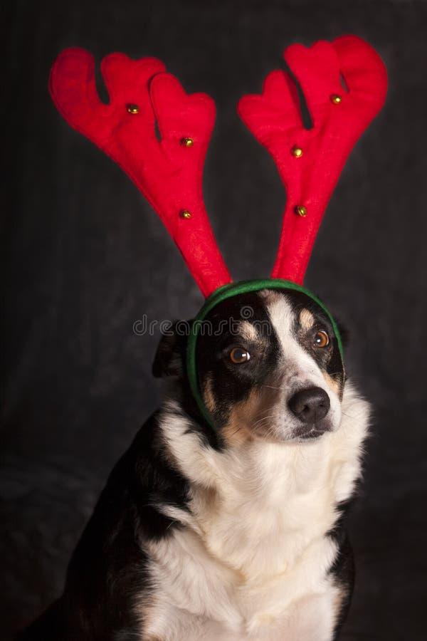 Crabot drôle avec le chapeau de renne images libres de droits