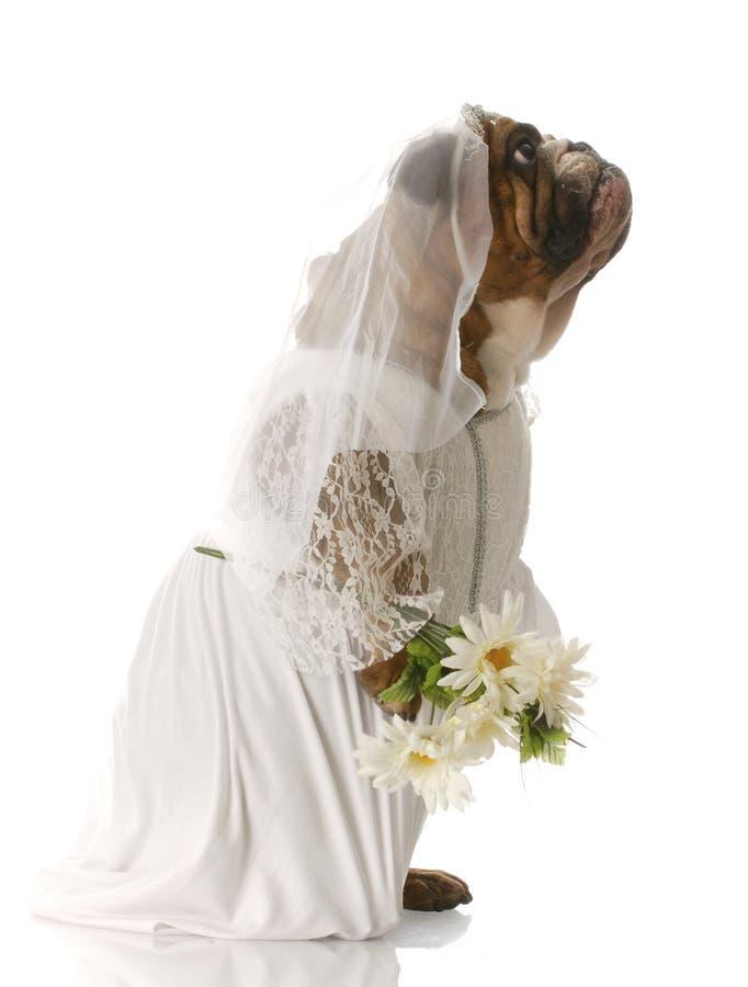 Crabot rectifié vers le haut de en tant que mariée photos libres de droits