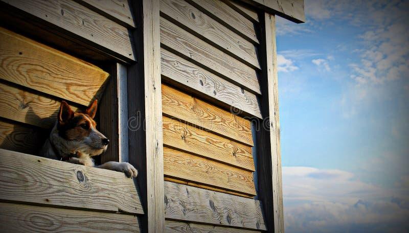 Crabot regardant à l'extérieur l'hublot photo stock