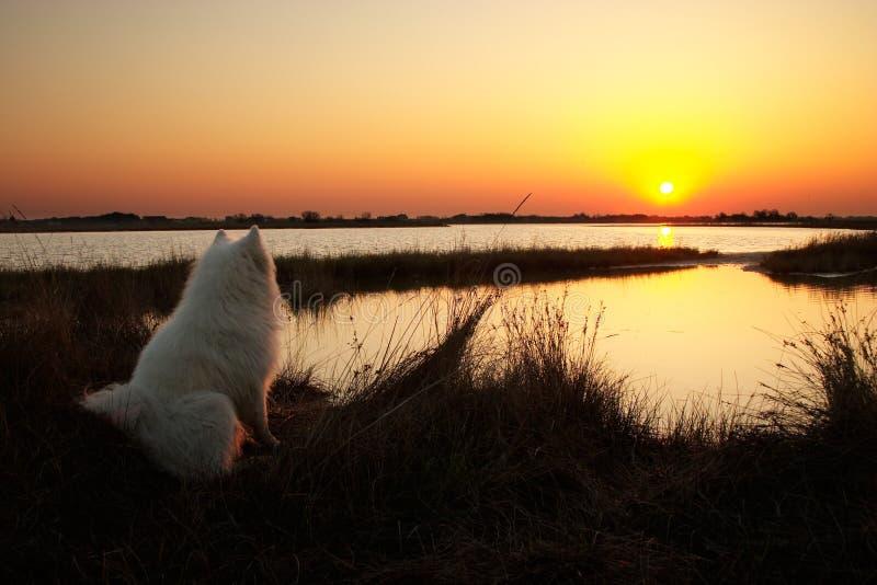 Crabot regardant sur le lever de soleil photo libre de droits
