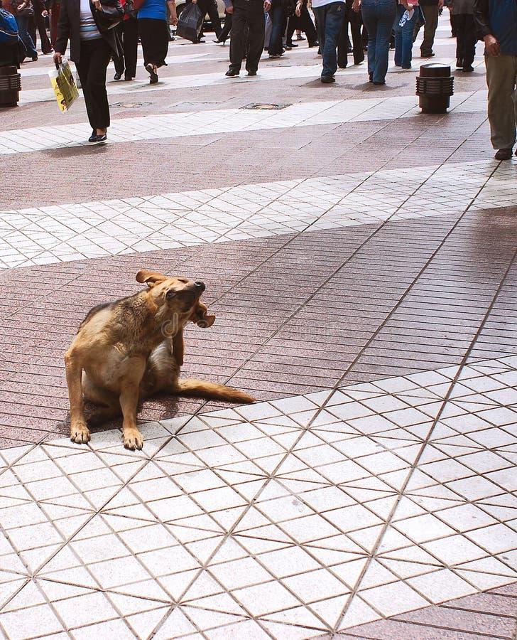 Crabot sur le trottoir photo libre de droits