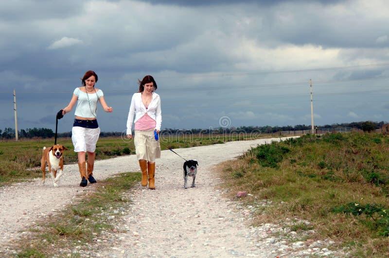 Crabots de marche sur la route de campagne photo libre de droits