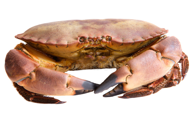 crabs съестное фото стоковые изображения