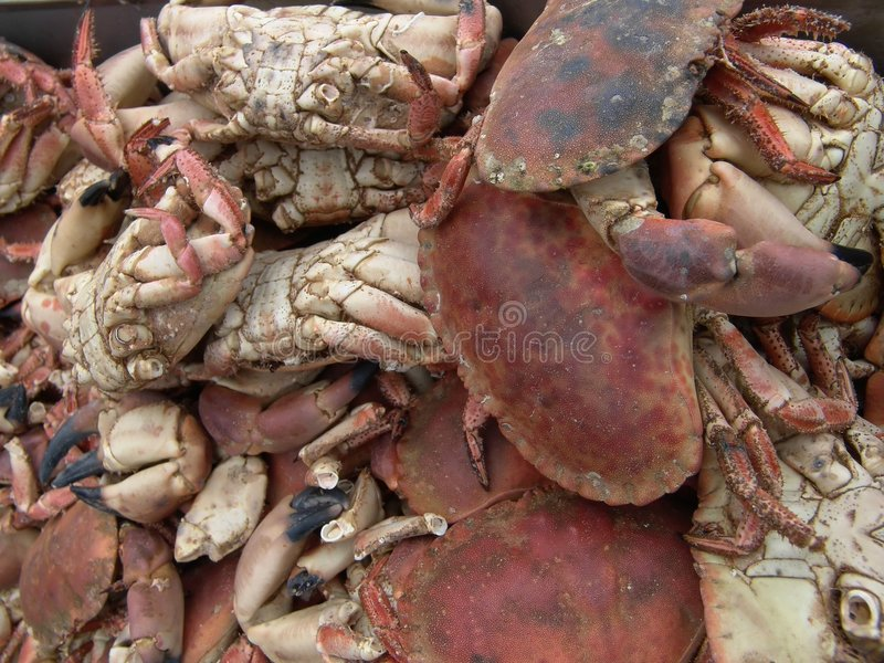 Download Crabs stock photo. Image of life, fishing, marine, claws - 14068