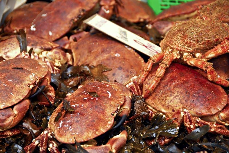 Download Crabs stock photo. Image of fish, food, sale, vendor - 17098688