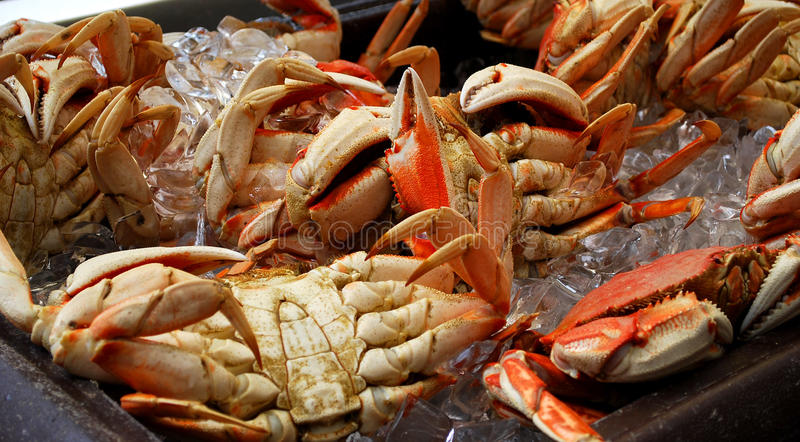 Crabs. A display of crabs in ice stock photo