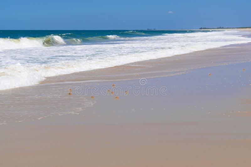 Crabs on the beach in Africa. In Mozambique in Africa royalty free stock photos