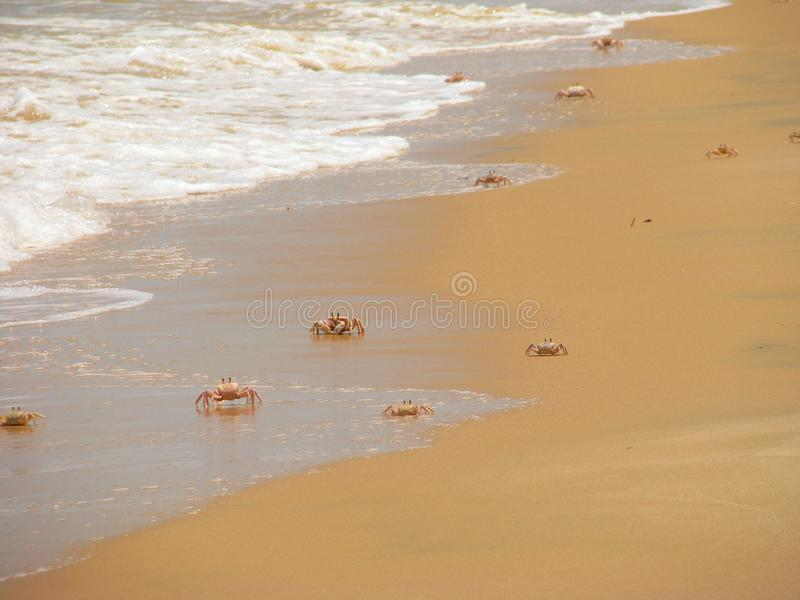 Download Crabs On The Beach On Bazaruto Island Stock Image - Image: 24692111