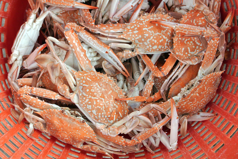 Crabs boiled and ready to eat. stock photo