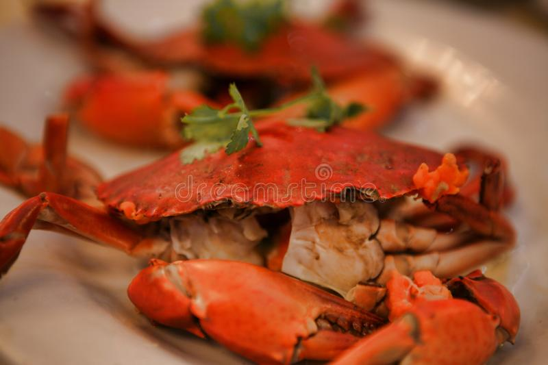Two boiled crab, server on a white plate. royalty free stock photo