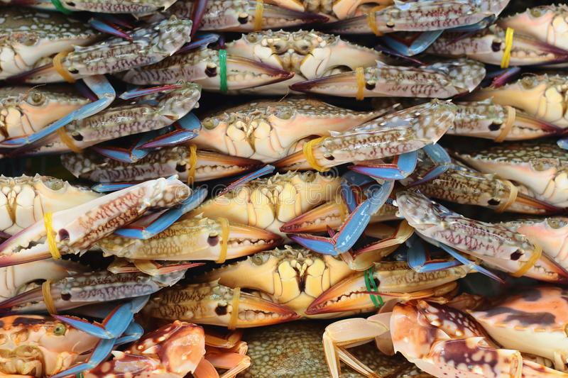 Crabs, group of objects, row, background stock photography