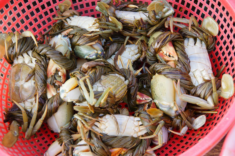 Crabs in Hoi An market. Crabs on display in the central market of Hoi An, Vietnam royalty free stock photography