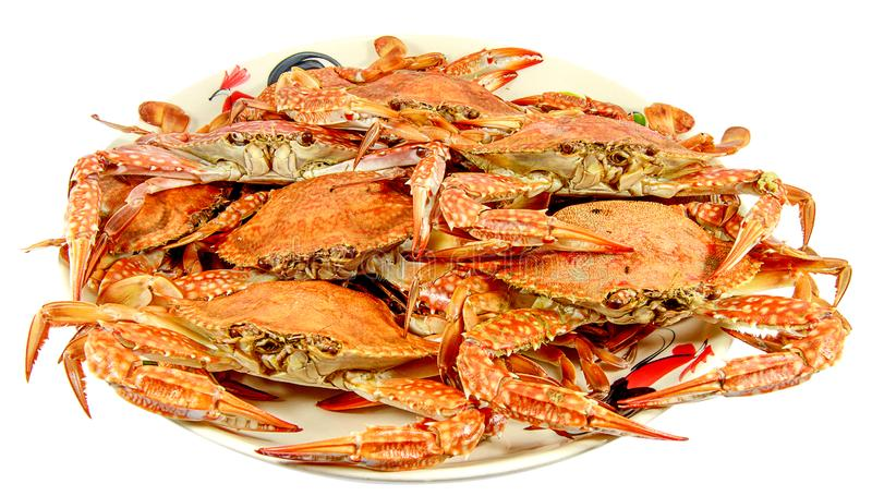 Crabs.Hot Steamed Crabs on a plate isolated on white background,Serrated mud crab, business people group stock photos