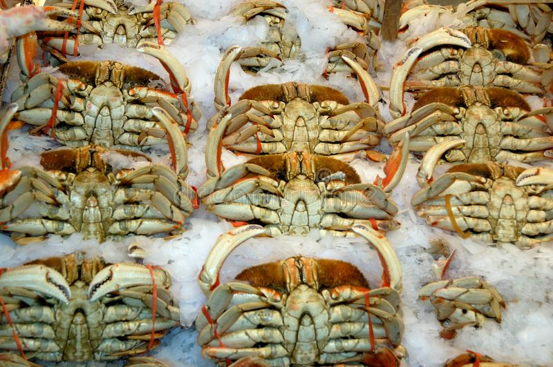 Download Crabs on the ice stock photo. Image of food, market, nature - 14810110