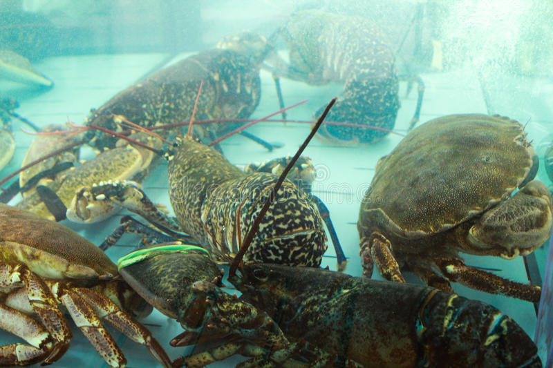 Crabs inside of a fish tank. At the restaurant royalty free stock image