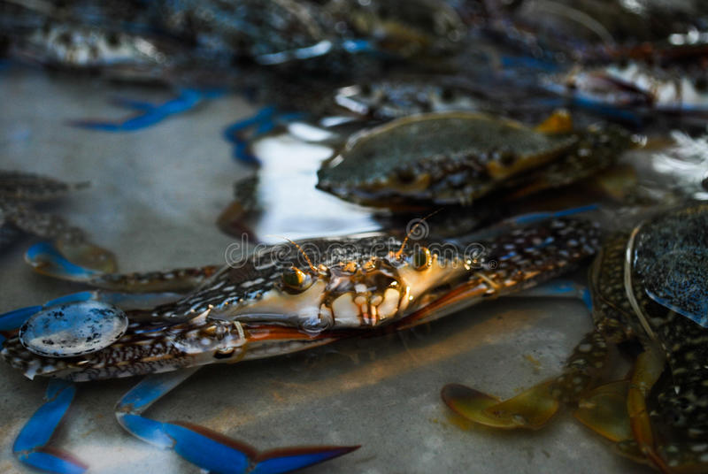 Crabs live float in street market stock photo