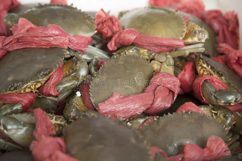 Crabs. A lot of binding crabs for selling background royalty free stock photos