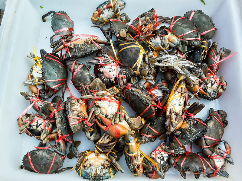 Crabs raw fresh in market. Seafood stock photography