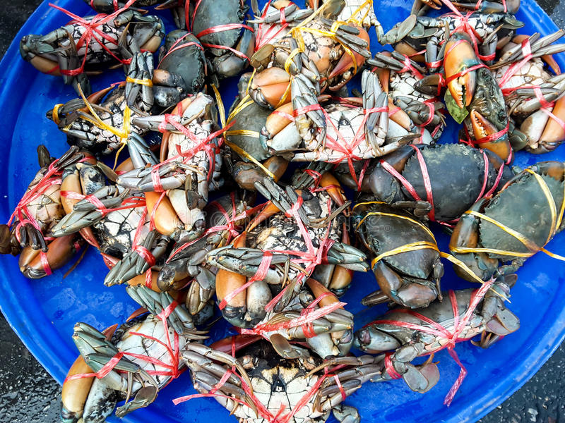 Crabs raw fresh in market. Seafood stock photo