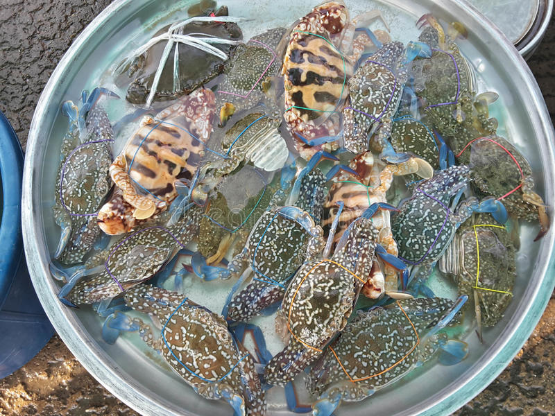 Crabs raw fresh in market. Seafood royalty free stock photography