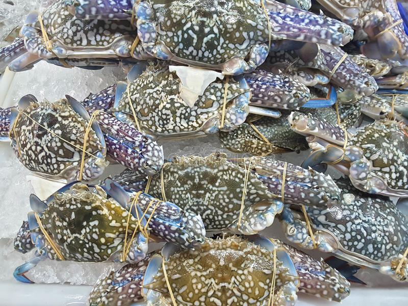 Crabs raw fresh in market. Seafood stock images