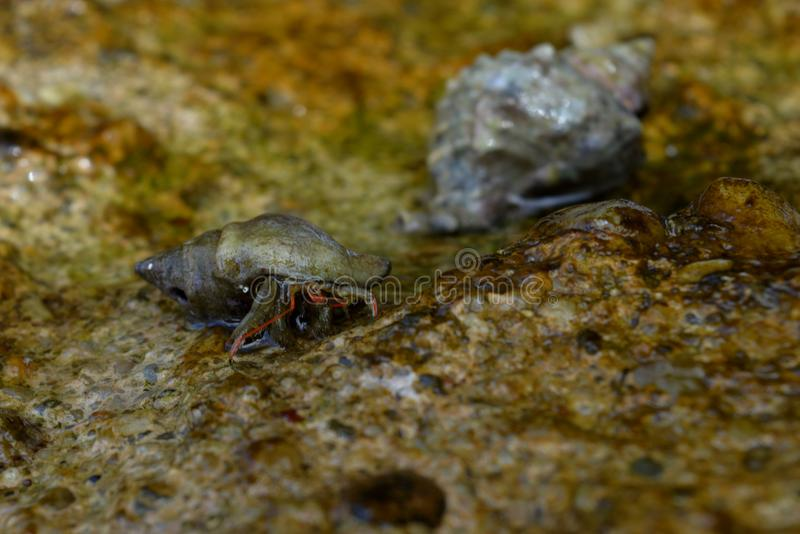 Crabs on the rock. Crabs on the wall in the sea royalty free stock images