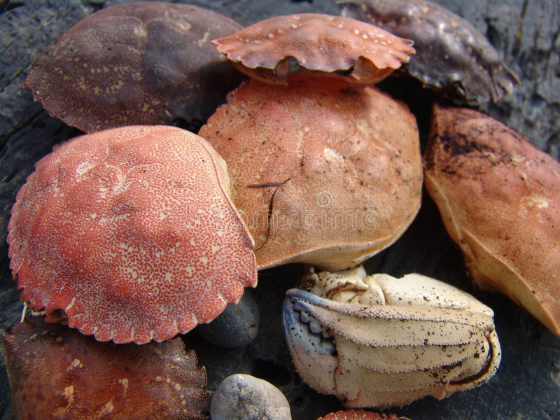 Crabs shells royalty free stock photography