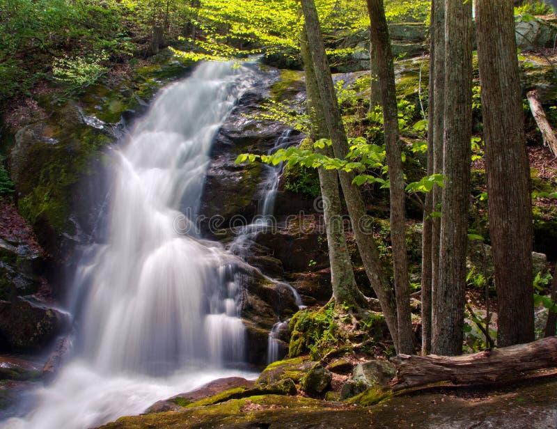 Crabtree nedgångar i George Washington National Forest i Virginia royaltyfria bilder