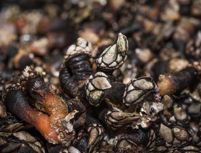 Cracas no mercado do mar fotografia de stock