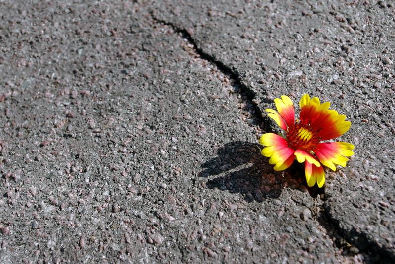 Crack on the asphalt road. A crack in the asphalt and a beautiful flower. Copy spaces. stock images