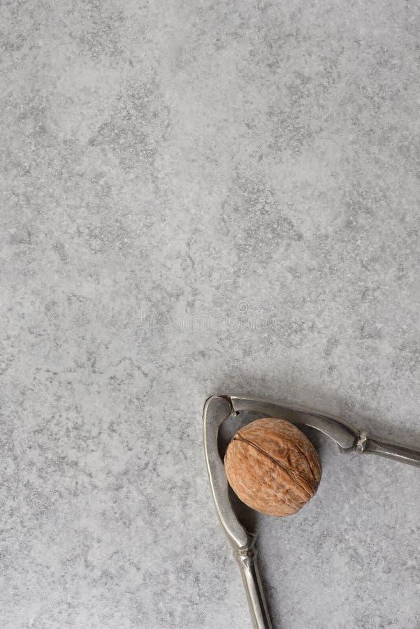 Crack the Nut Walnut and nutcracker on grey background royalty free stock image