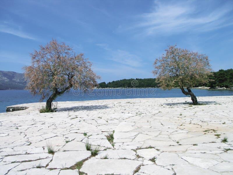 Crack stone trees oasis. Crack rift flaw split stone desert oasis stock photo