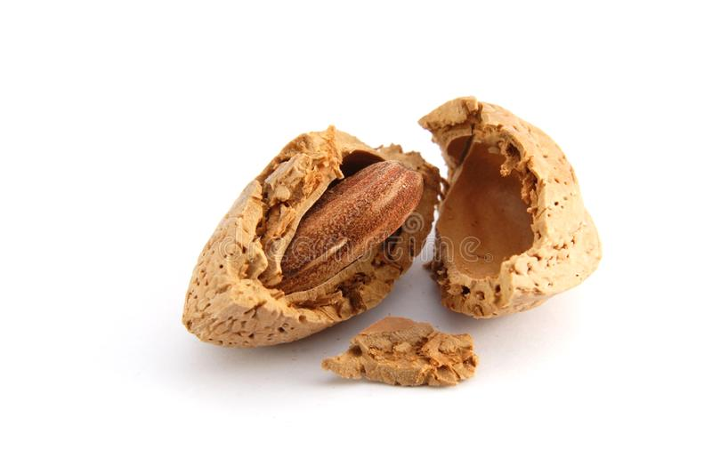 Cracked almond in a shell stock image