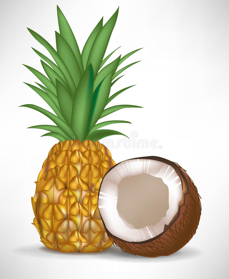 Download Cracked Coconut And Pineapple Stock Vector - Illustration: 22439415