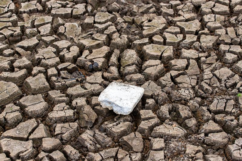Cracked dry land without wate. Abstract, agriculture, arid, backgrounds, barren, bud, clay, concepts, copy, damage, dead, desert, determination, dirt, dirty royalty free stock photos