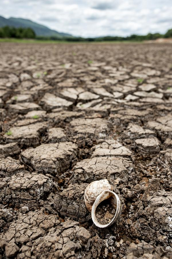 Cracked dry land without wate. Abstract, agriculture, arid, backgrounds, barren, bud, clay, concepts, copy, damage, dead, desert, determination, dirt, dirty stock images