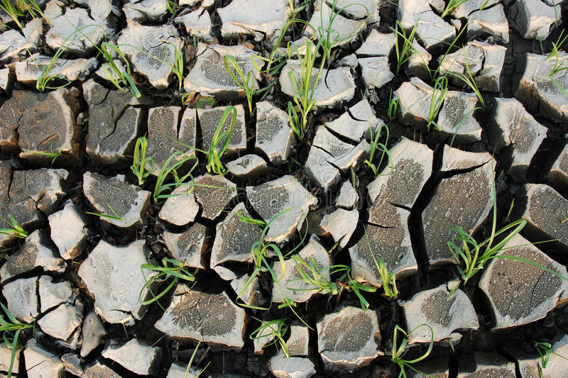 Download Cracked earth stock photo. Image of nature, grey, green - 26544732