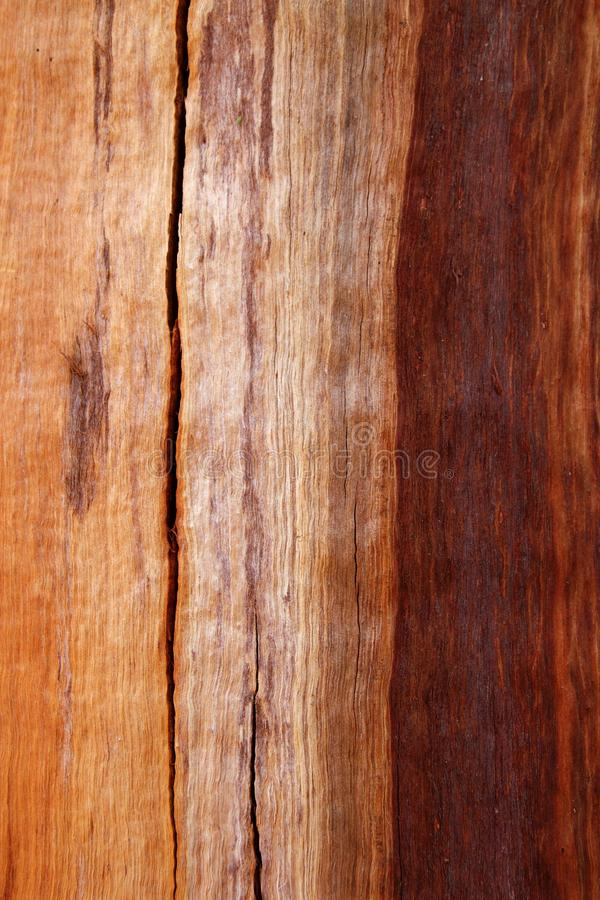 Free Cracked Eucalyptus Trunk Wood Texture Royalty Free Stock Photography - 16826157