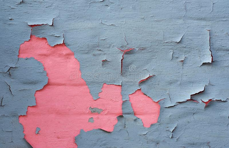 Picture of cracked grey paint on a wall with pink color beneath royalty free stock photos