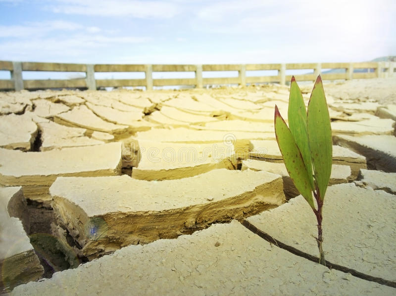 cracked ground in summer. Plant in Dry soil. stock photography