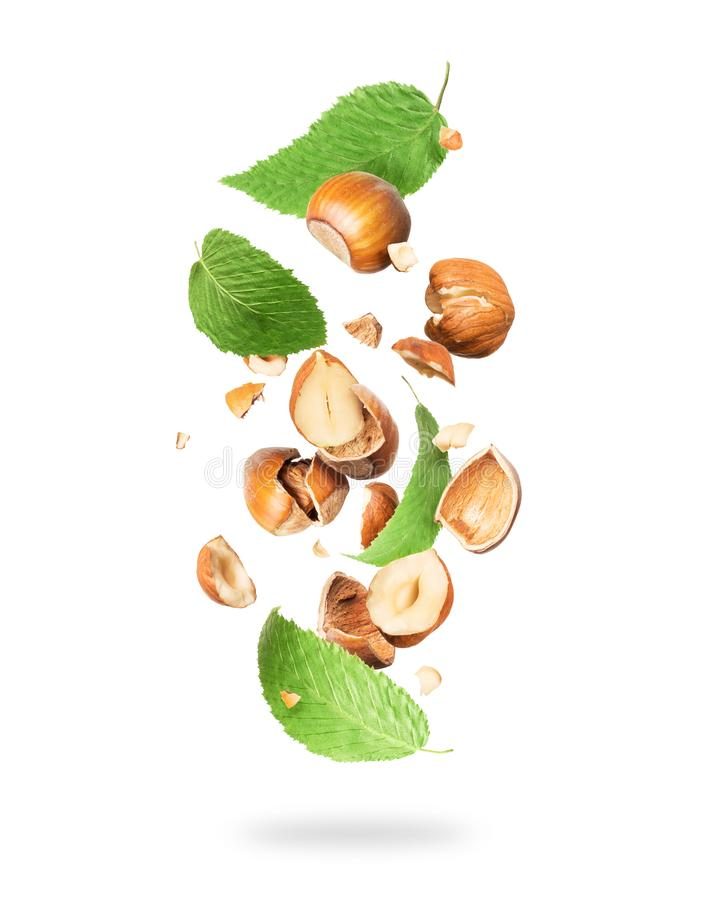 Cracked hazelnuts with leaves fall down isolated on white background.  vector illustration
