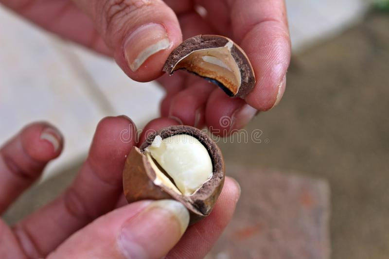 Cracked macadamia nuts royalty free stock images