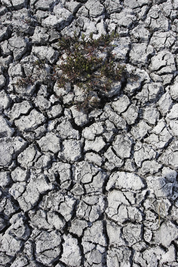 Download Cracked Mud On Dried Up Big Muddy Lake Stock Photo - Image: 15803408