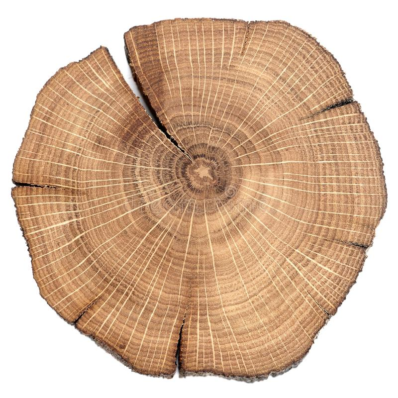 Cracked oak split royalty free stock image