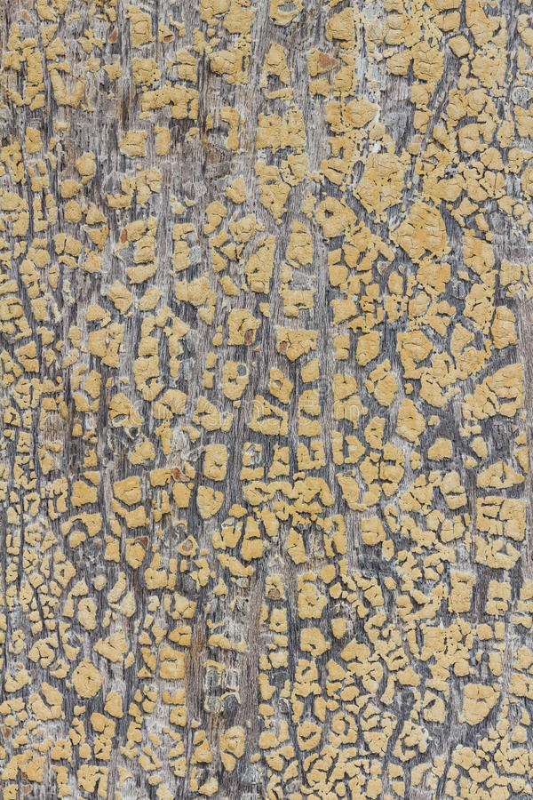 Download Cracked Paint On Old Wooden Window Stock Photo - Image of flake, nobody: 29482158
