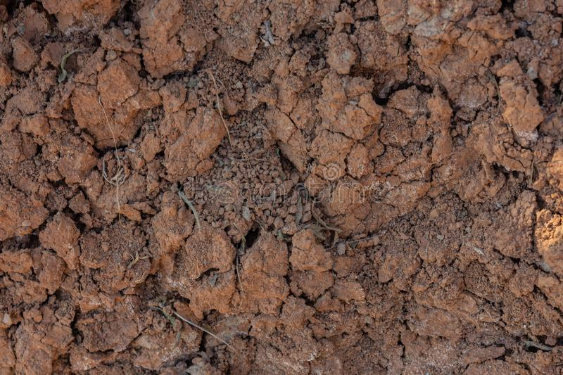 Cracked red clay soil in drought. A green leaf of grass makes its way through the lifeless soil stock photos
