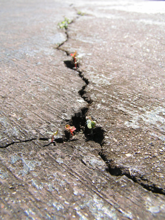 Cracked road with new life. Close-up view of a cracked road with new life coming out of it stock photos
