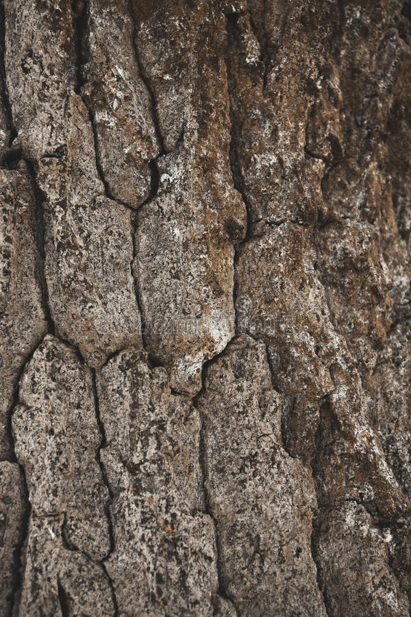 cracked rough brown tree bark background stock images
